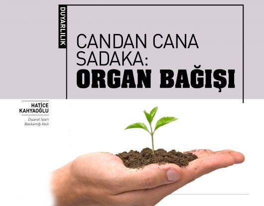 organbagisisongaliba